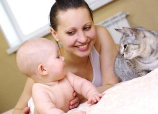 É possivel manter um gato em casa com toxoplasmose?