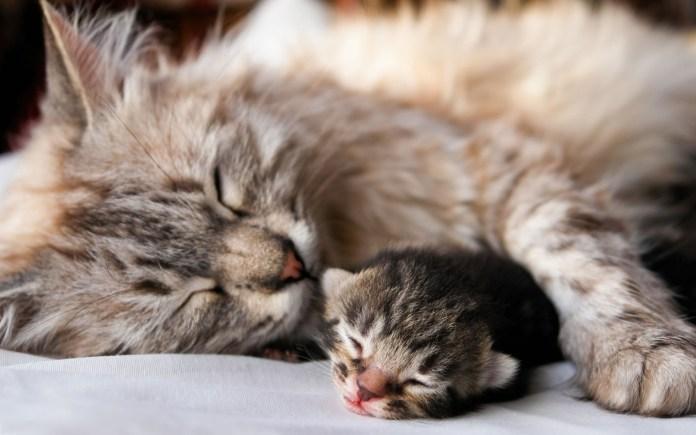 Quanto tempo deve um gatinho ficar com sua mãe