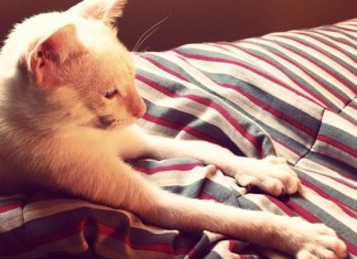 A verdadeira razão para o seu gato massajar