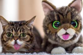 Porque nunca deve punir um gato? - Universo de Gatos Blog