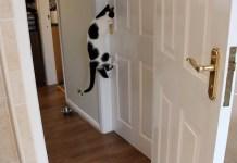 O meu gatinho tenta fugir de casa