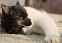 como acolher um gato em sua casa