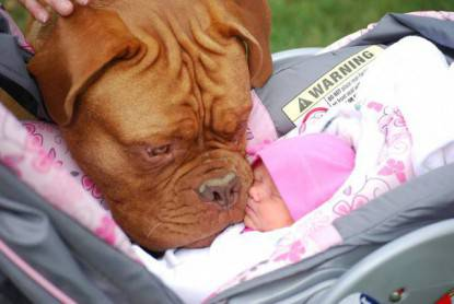 cane con neonata