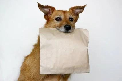 Risultati immagini per foto doggy bag