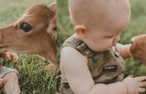 bambino con vitello