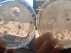esperimento su latte materno e formula