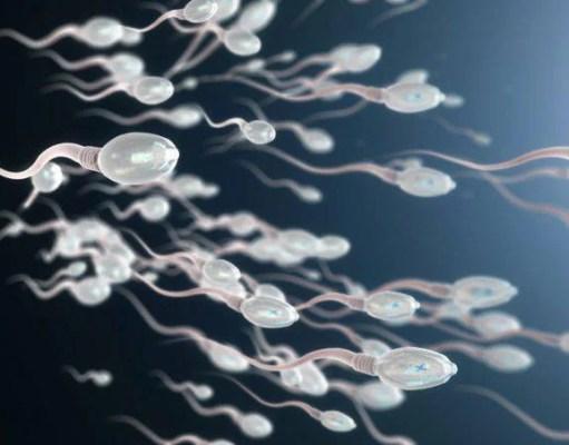 qualità degli spermatozoi
