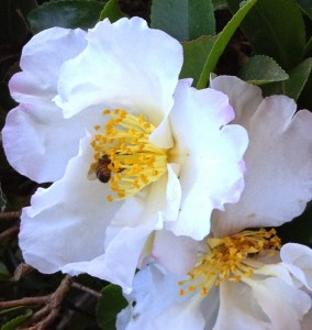 Bee-Flower-Giving-Receiving