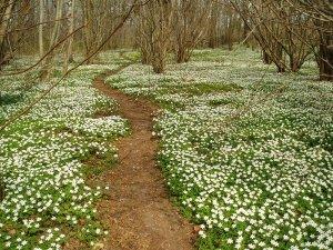 Flowery wood path