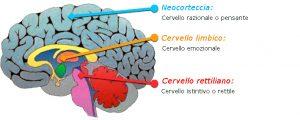 Il cervello rettiliano è una delle tre parti del nostro cervello