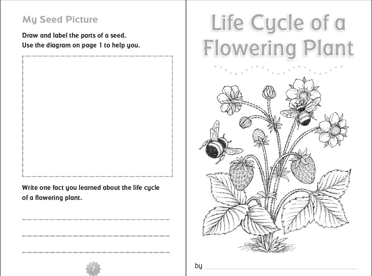 Plant Worksheets 3rd Grade