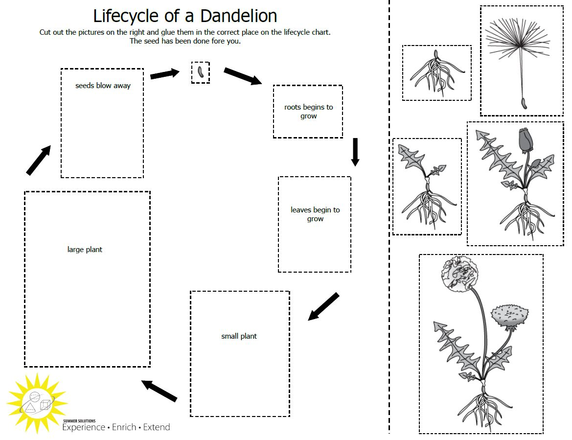 Life Cycle Of Plant Worksheets