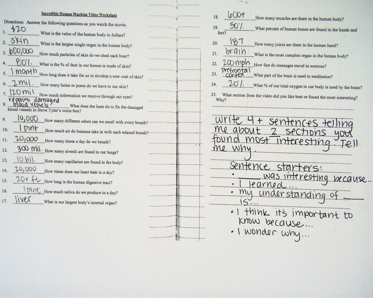 The Incredible Human Machine Worksheets Answers