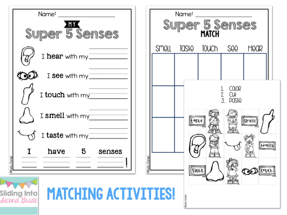 medium resolution of English Language Worksheets Five Senses   Printable Worksheets and  Activities for Teachers