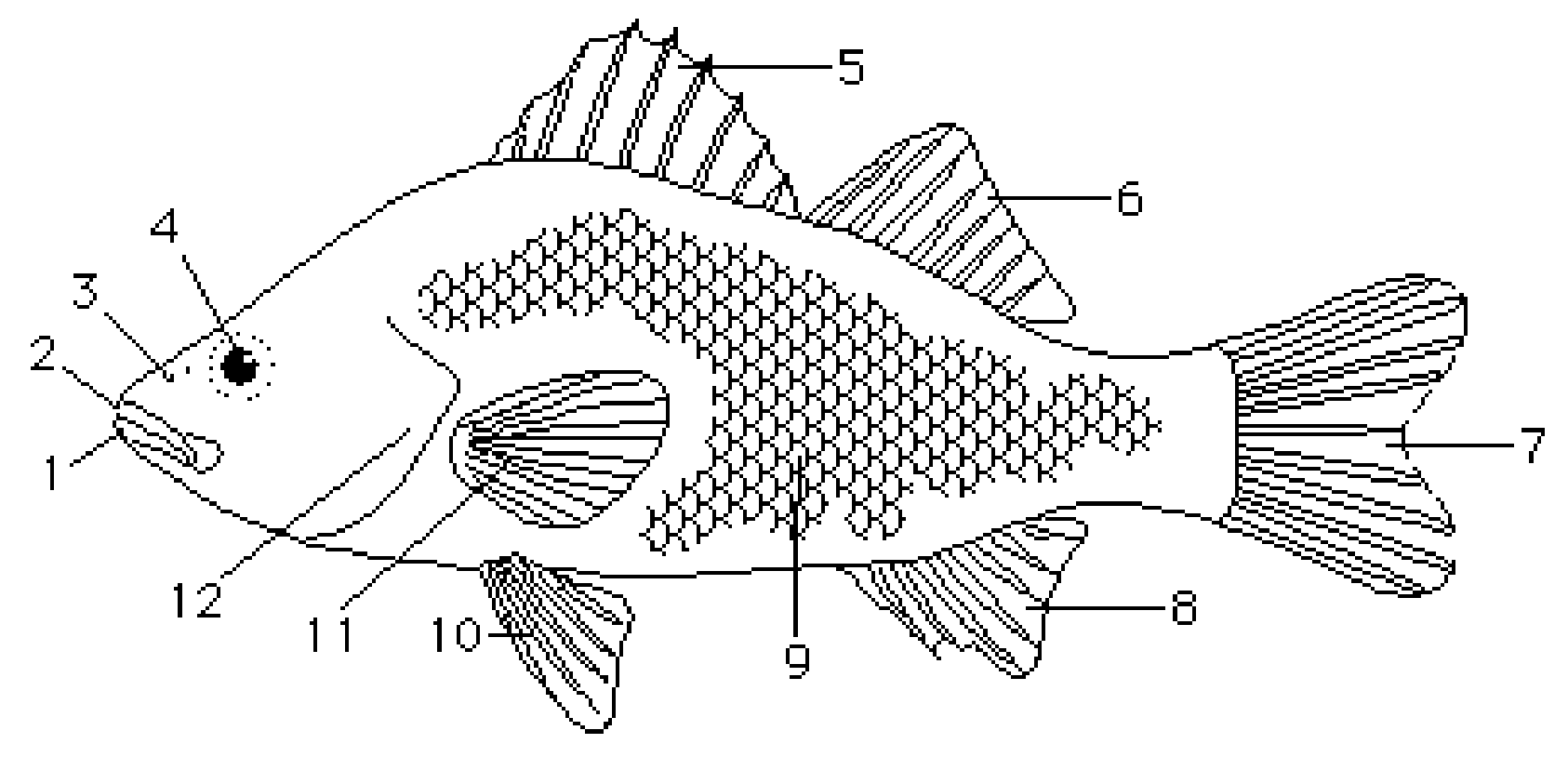 Fish Parts Worksheets