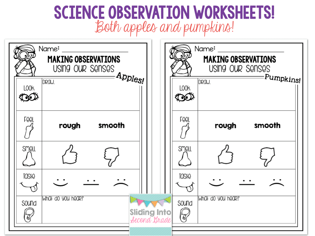 2nd Grade Science Observation Worksheet