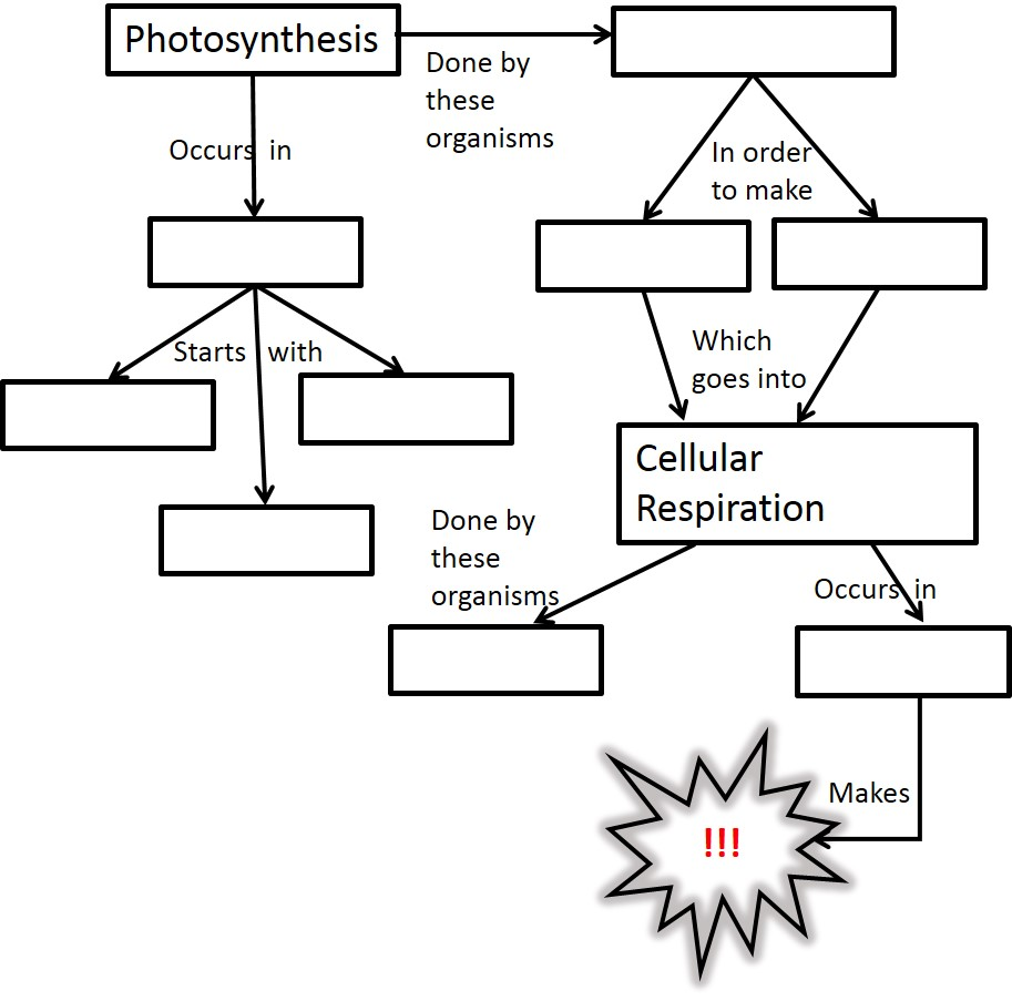 Photosynthesis Diagram Worksheets Answer Key