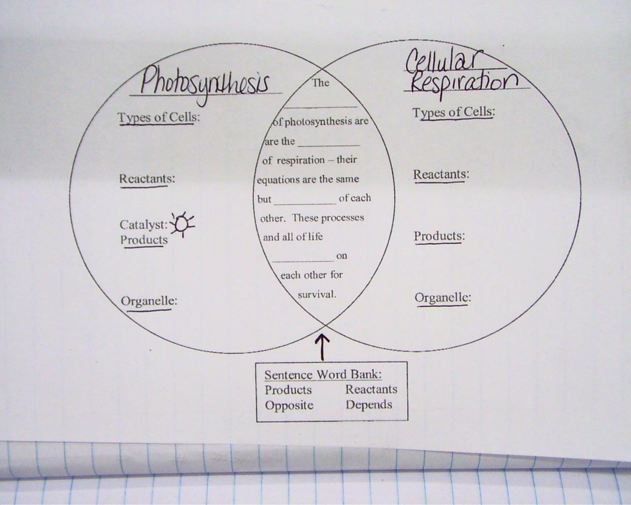Respiratory Diagram Worksheets