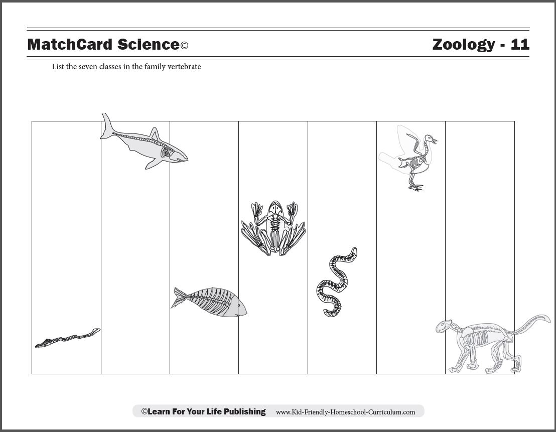 Vertebrates Worksheets