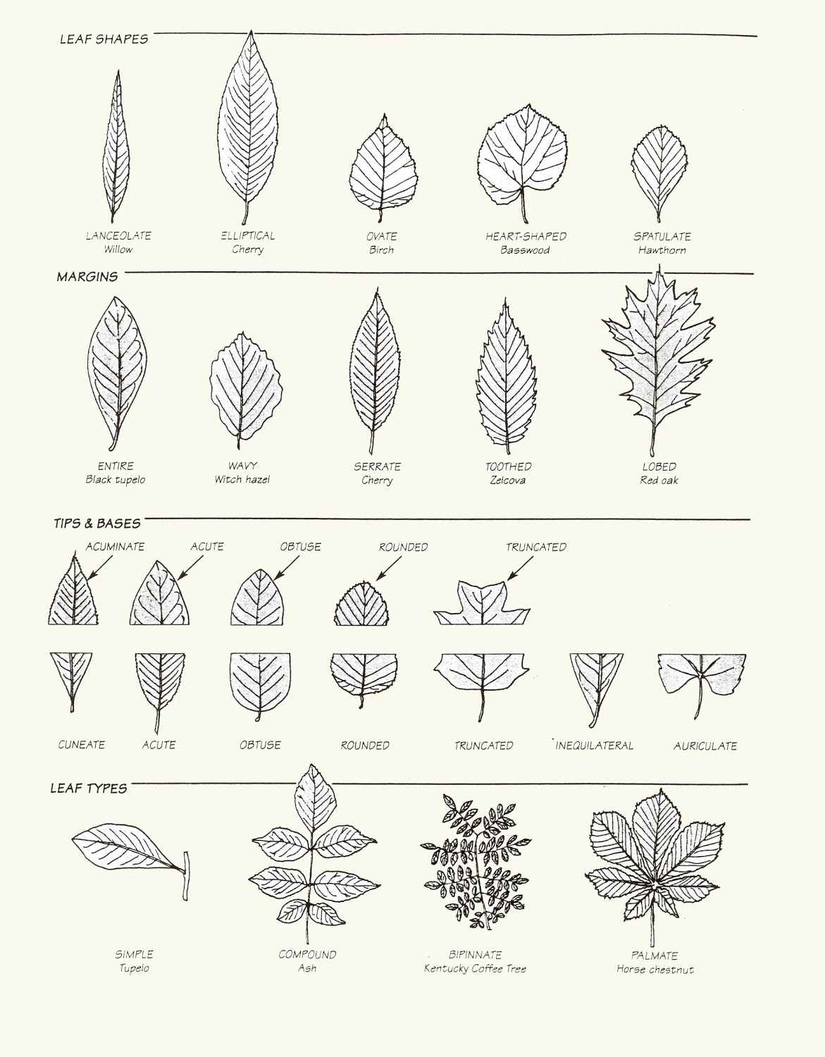 Leaf Types Worksheets
