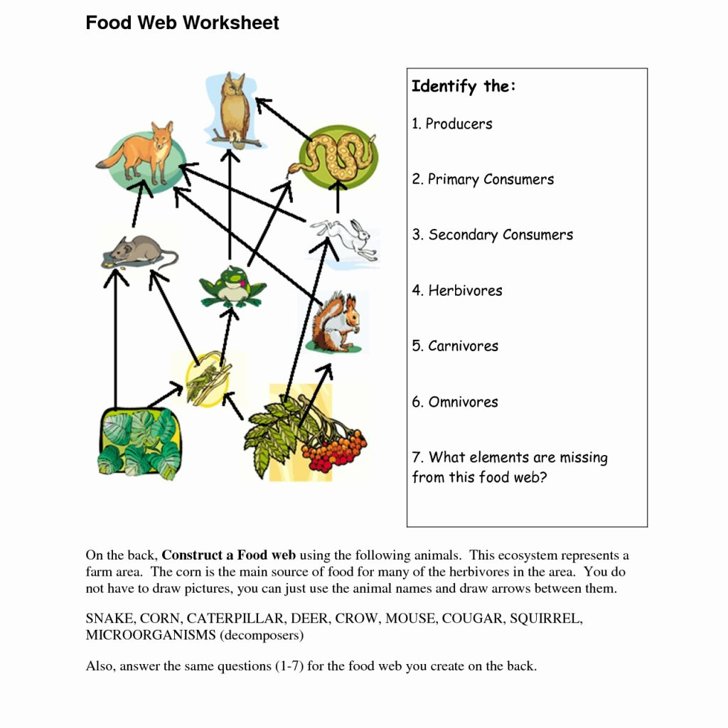 Food Chains And Food Webs Worksheet Answers Worksheets