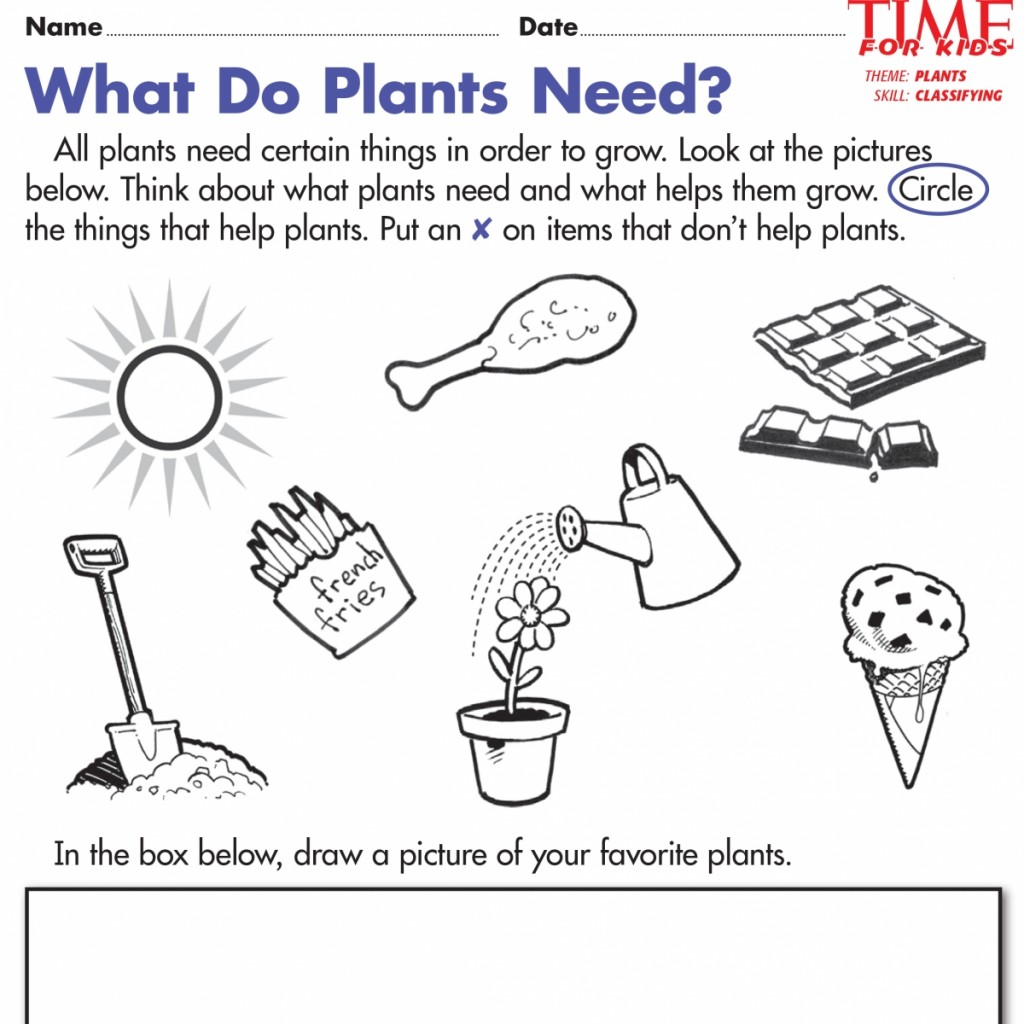 Plant Needs Worksheets Kindergarten