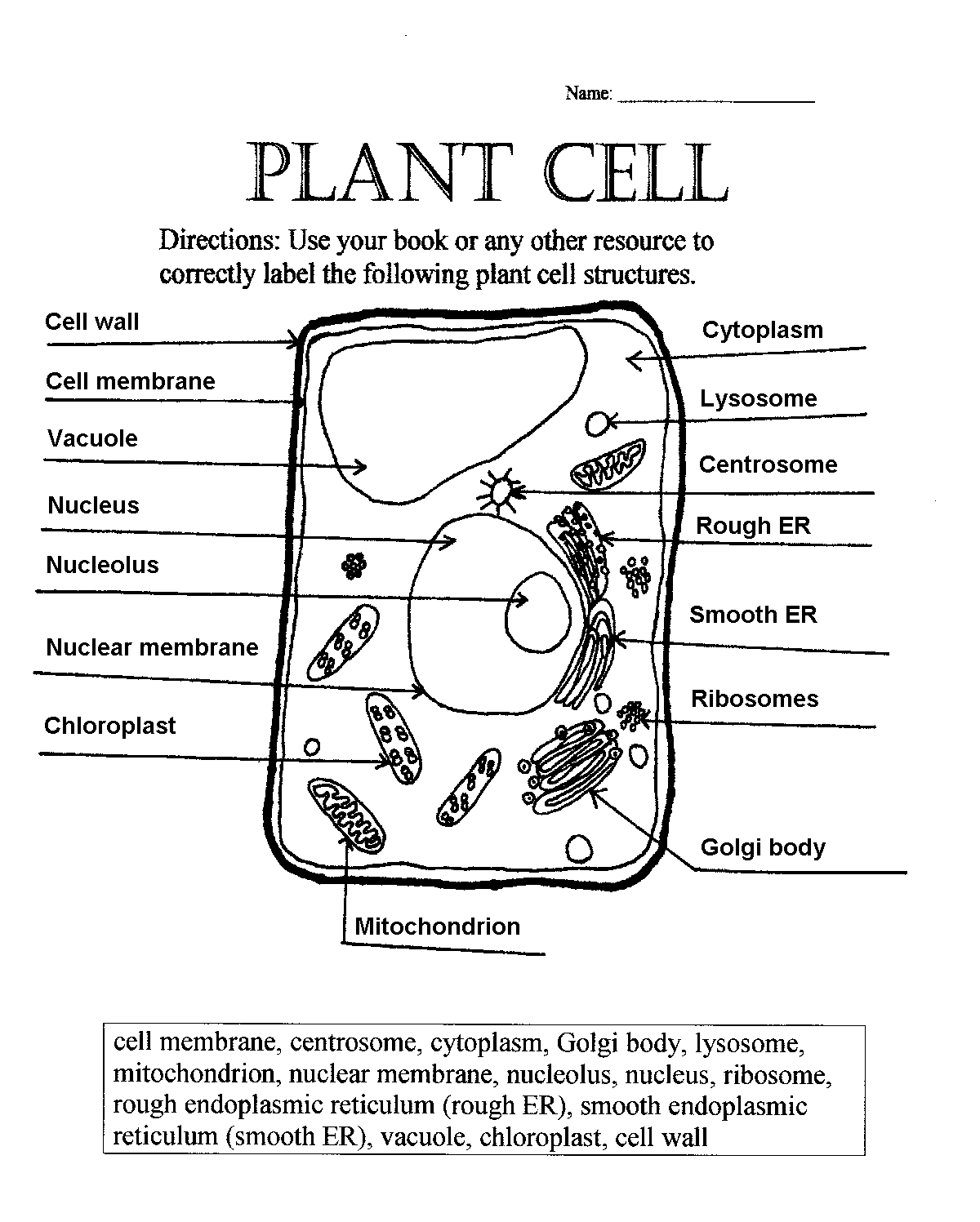 Parts Of A Plant Cell Worksheets