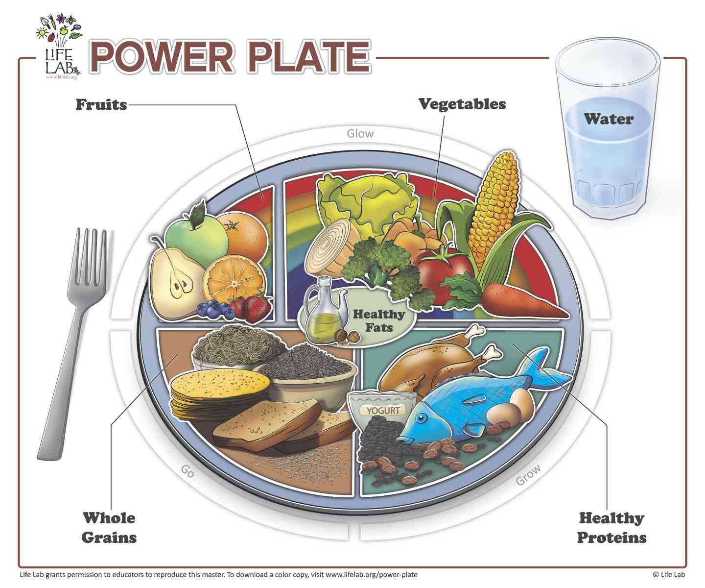 Healthy Food Plate Worksheets