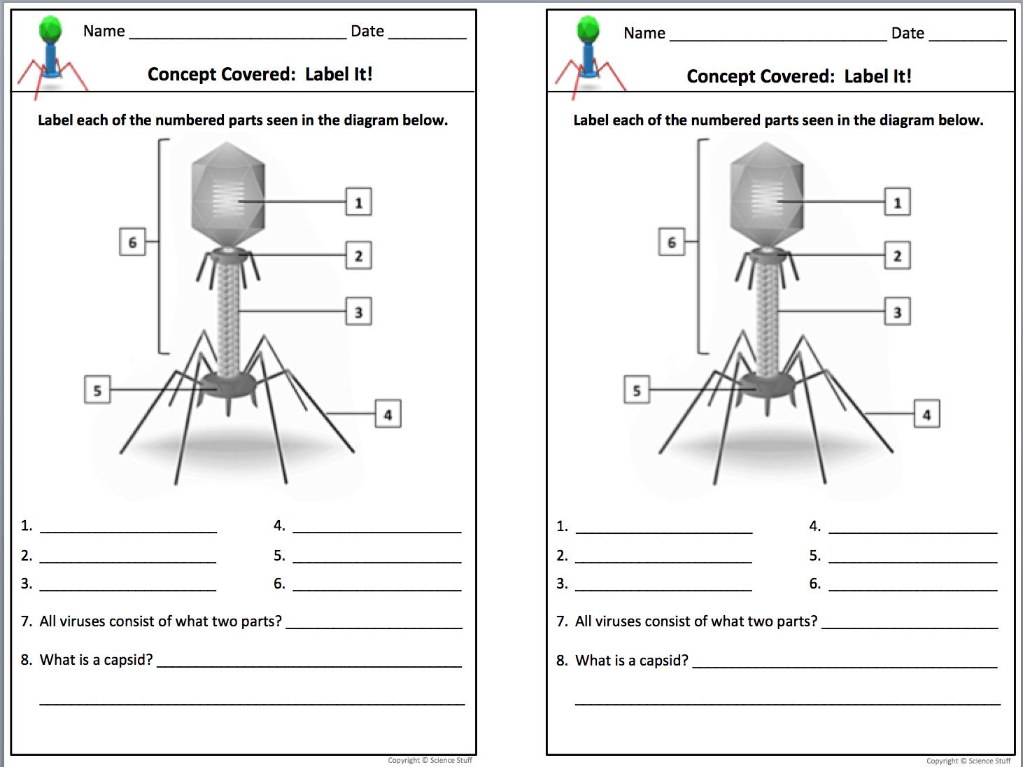 Virus Worksheets For Biology Worksheets Samples