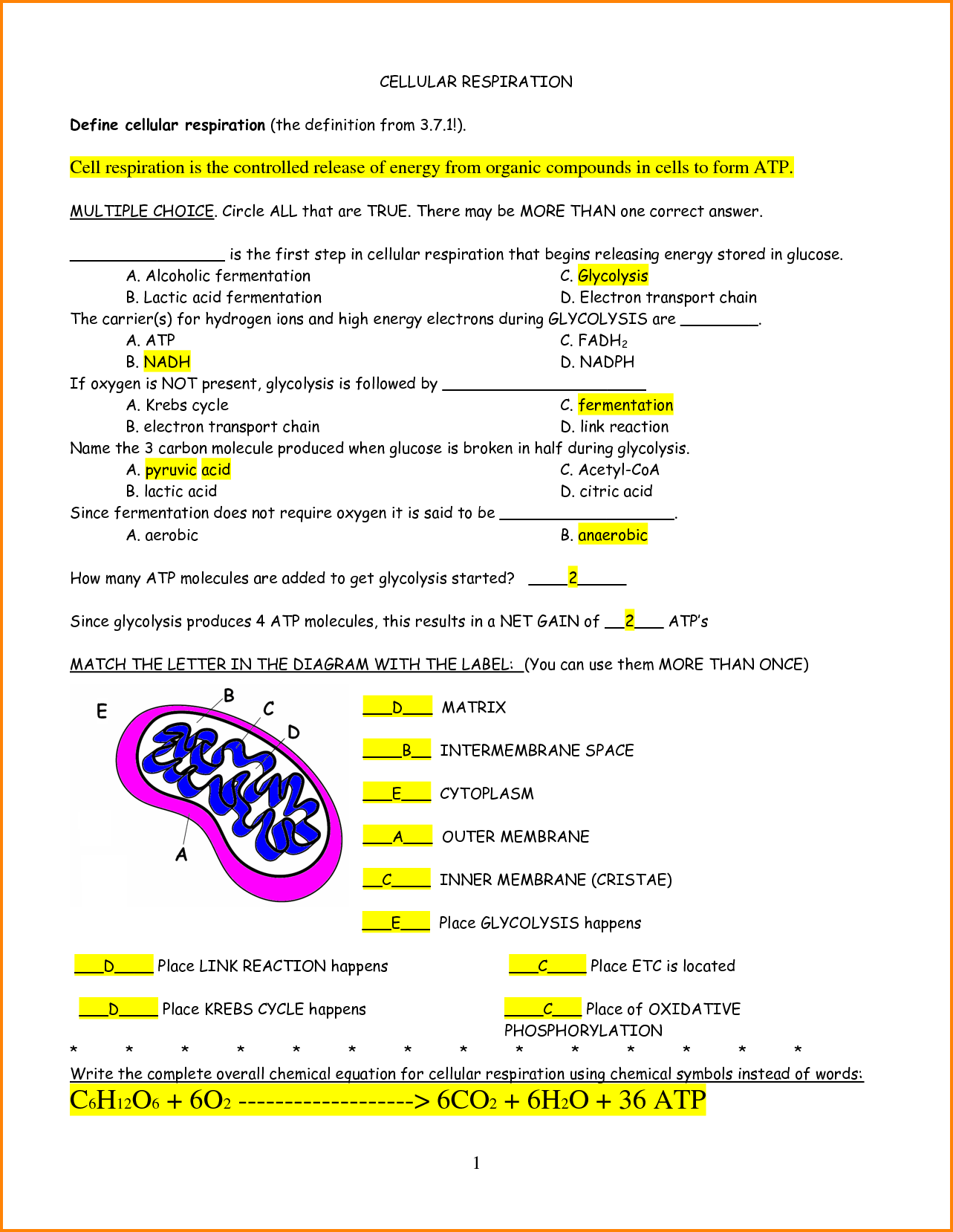 Photosynthesis And Cellular Respiration Worksheets High School