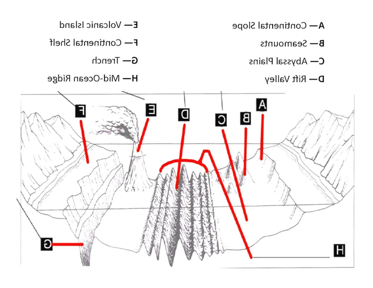 Ocean Floor Diagram Worksheets