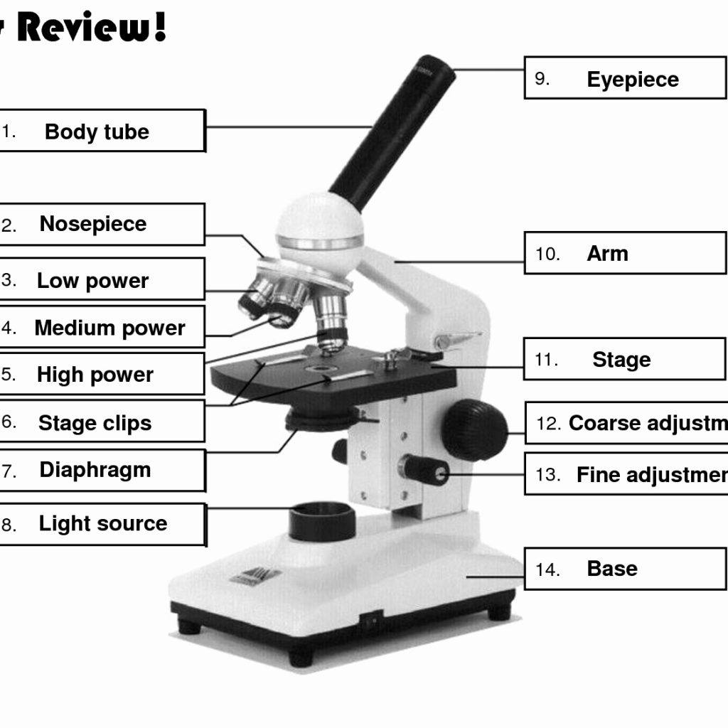 Parts Of The Microscope Worksheets