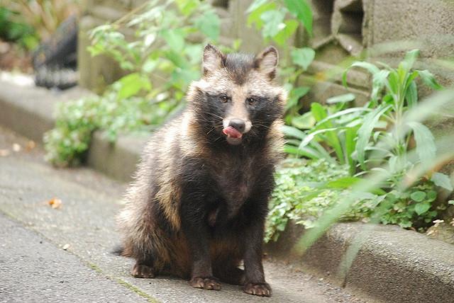 Animals Live Japan