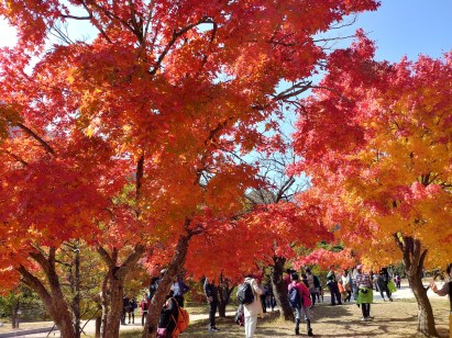 otoño en Seoraksan