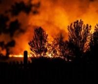 В Великобритании произошел пожар в родном лесу Винни-Пуха