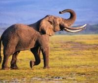 Африканские страны потребовали снять запрет на продажу слоновой кости