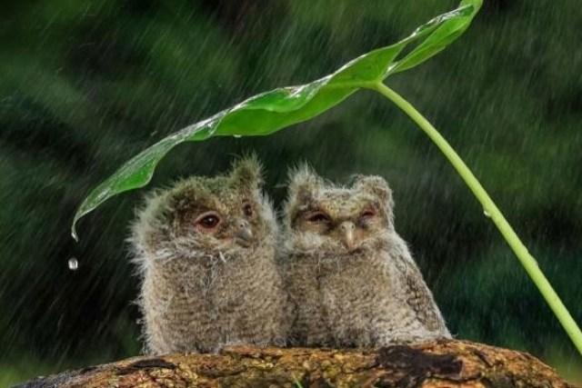 Жителей Карпат предупредили о сильных дождях