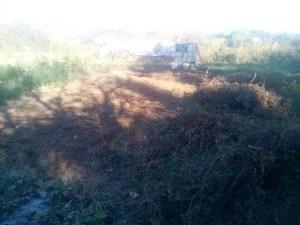 terreno pulito dai pomodori