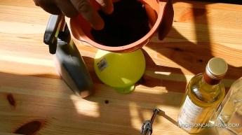 Come allontanare le formiche dall'orto