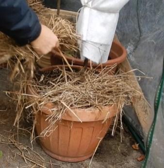 agrumi in serra per inverno