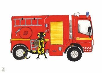 Salamandre pompier