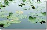 Floating Leaves - unpocogeek.com