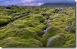 Lava Field, Eldhraun, Iceland