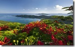 Flamboyant flower and Magens Bay from Drake's Seat,  St. Thomas, U.S. Virgin Islands