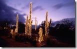 Saguaro cacti decorated with Christmas lights, Sonoran Desert, Tucson, Arizona, USA