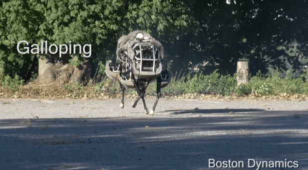 wildcat boston dynamics - unpocogeek.com