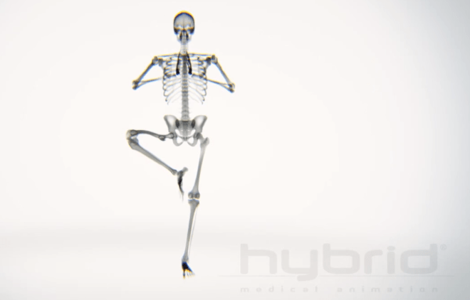 X-ray Body in Motion - Yoga - unpocogeek.com