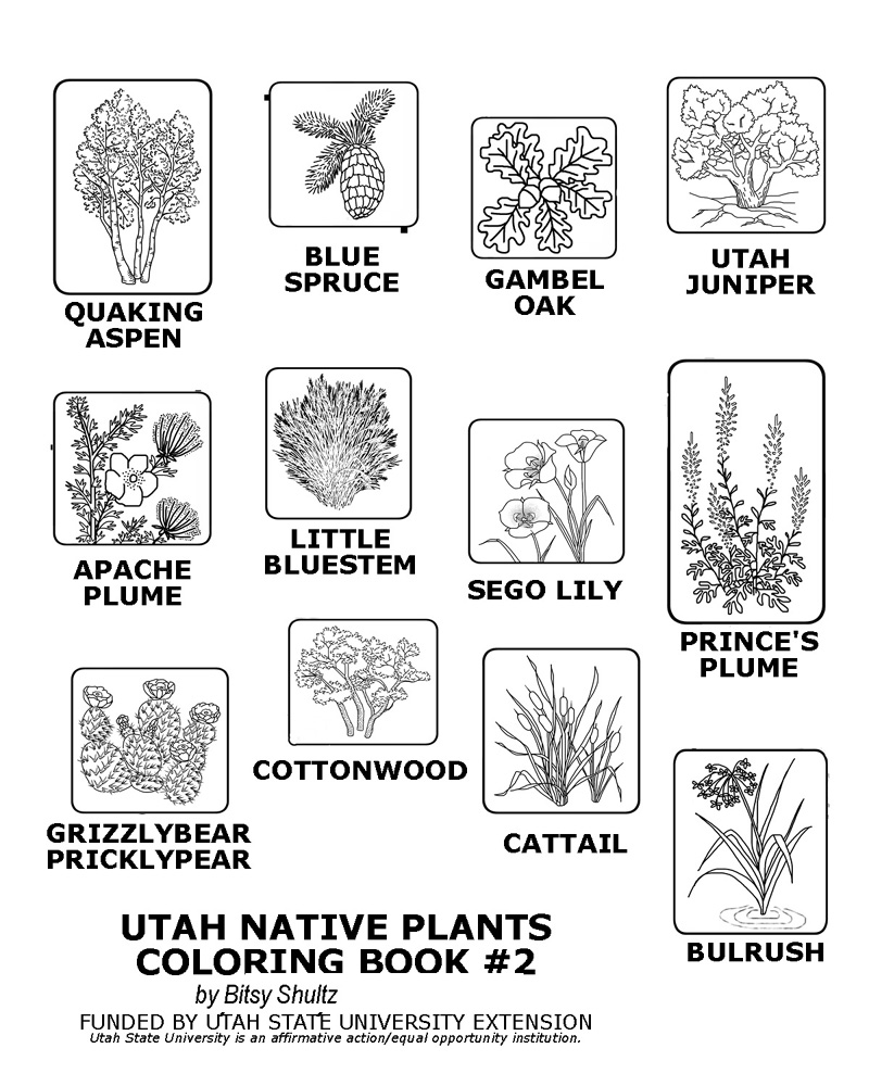 Thumbnail image of plants included in coloring book #2