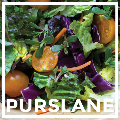 Purslane Graphic