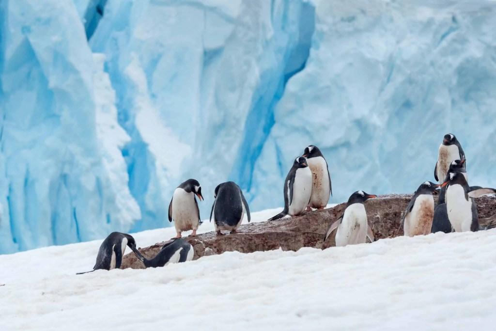 croisière, Antarctique, photo, Pôle Sud, manchot
